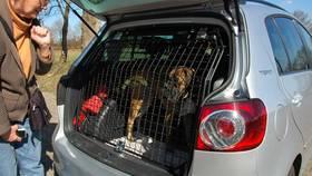 Amenagement Vehicule Pour Chien cages à chiens | exemples d'aménagements